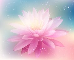 Water Lily by April McNett
