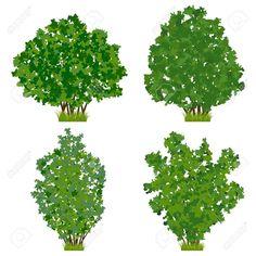 shrub - Google Search