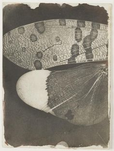 William Henry Fox Talbot. At the Origins of Photography - The Pushkin Museum of Fine Arts