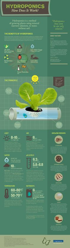 Hydroponic Infographic (When you're a Vegetarian/Vegan it could be ideal to be…