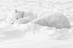 Área Visual - Blog de Arte y Diseño: Kyriakos Kaziras. Fotografías del Ártico