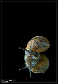 Masters: Animal Portraits 2011 - Worth1000 Contests
