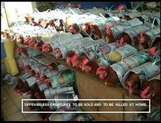 """""""These chickens are sold as """"take aways"""" in a """"chickens wrapped in newspaper"""" Spotted in Sibu Central Market (Malaysia) Sold as live meat can be freshly slaughtered by the purchaser at home."""" (via Animal Liberation Worldwide on Facebook)"""