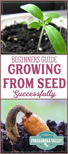 Do you want to grow a garden, but aren't sure where to start? Our seed sowing guide for beginners with give you the tips on tricks you need to sow your own seeds #garden #vegetablegarden #homesteading #sustainability