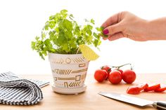DIY this pretty potted parsley plant with this how-to.