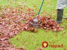 Dobrý záhradkár dokáže zužitkovať všetko, čo mu príroda na záhrade ponúka. Všetko vám totiž môže pomôcť zveľadiť vašu záhradu a ušetriť peniaze vo vašom rodinnom rozpočte, ktoré by ste inak minuli v záhradkárstve.