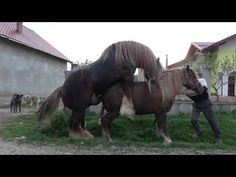 Donkey Mating With Horse Live | Animals Mating | Horses ...