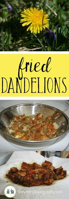 Dandelion Heads Make these delicious flower poppers with weeds and just a few ingredients you already have in your pantry.Make these delicious flower poppers with weeds and just a few ingredients you already have in your pantry. Real Food Recipes, Vegetarian Recipes, Cooking Recipes, Healthy Recipes, Cooking Games, Cooking Rice, Vegetable Recipes, Dandelion Recipes, Gourmet