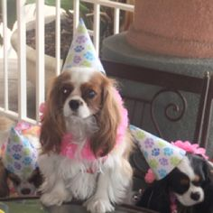 What do you mean it's not my birthday?