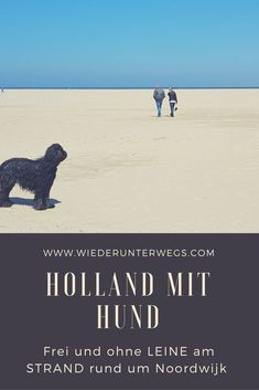 Am Strand ohne Leine: Holland mit Hund. On the beach without leash: Holland with dog. Around Noordwijk Pet friendly. Amsterdam What To Do, Visit Amsterdam, Camping Holland, Dog Travel, Travel Tips, North Sea, Best Places To Travel, Ireland Travel, Beach Trip