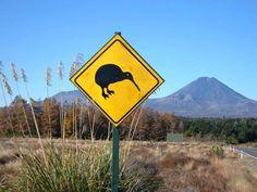 Vuelo a Marte //  ¡Atención, Kiwis a la vista! by @Kobmusic (Kiwi Music)