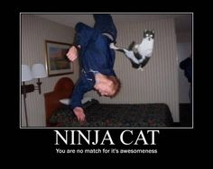 never safe (unless ninja kitteh is on your side)