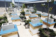 Millions of Bees Move Into W Hotel Austin