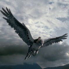 """""""…He's no longer earthbound and he's no longer burdened by all the problems that he has when he's on the ground. If he could only fly forever, he'd be all right."""" – Steve Kloves, Screenwriter #HarryPotter"""
