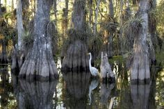 Everglades and the Keys — Florida