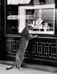 photography, leopard, Cartier, fashion,