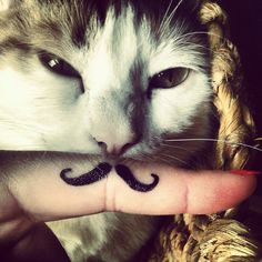 stupido gatto!     #cat #sutupid #mustache #finger #hipster #margò #kitty #instagram