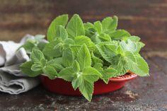 Come coltivare la menta - La menta è una pianta ricca di proprietà benefiche: ecco tutte le indicazioni utili su come coltivarla in vaso sul balcone o in giardino.