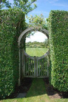 Privet Hedge | Gate in privet hedge, Nantucket