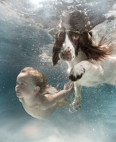 English Springer Spaniel and toddler swimming.