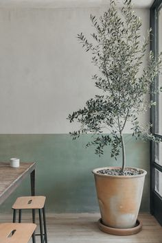 Indoor Trees, Indoor Plants, Indoor Olive Tree, Wabi Sabi, Design Japonais, Dining Stools, Dining Table, Orchid Care, Natural Materials