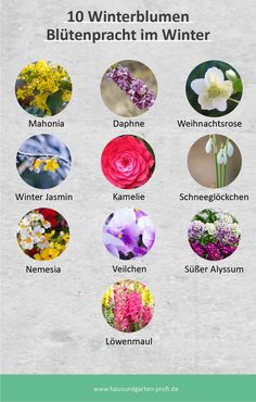 Garden Planning, Beautiful Homes, Floral, Nature, Flowers, Projects, Outdoor, Decor, Gardens