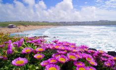 Glamping in Cornwall with Country View Cottages & Yurts - The Aussie Flashpacker World's Most Beautiful, Beautiful Beaches, Most Luxurious Hotels, Luxury Hotels, Cornwall Beaches, Newquay Cornwall, Resort Spa, Glamping, The Great Outdoors
