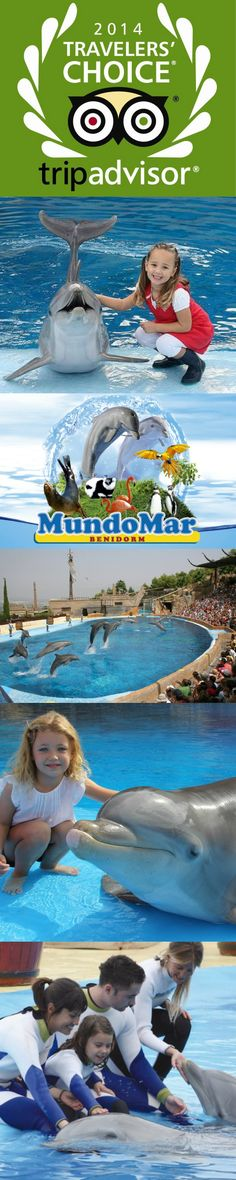 Dolfijnenpretpark Mundomar in #Benidorm heeft de 9e plaats in de TripAdvisor Traveler's Choice Awards Top 10 van beste aquariums wereldwijd veroverd.