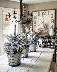 Trees in olive buckets adorning our kitchen table..Amy Kinser