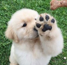 holy smokes...high five little pup