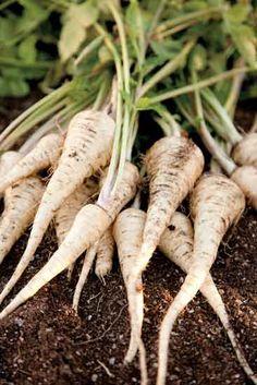 Winter's Larder: Parsnips and Pears - Food - Heirloom Gardener