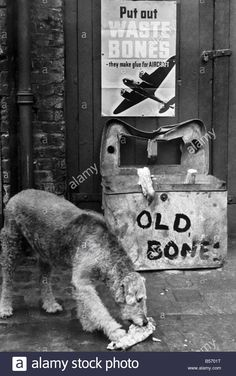 Stock Photo - War on waste: This cannie friend donates his bone to the waste basket so it can be melted down for glue. Animals And Pets, Cute Animals, Little Brothers, War Dogs, Airedale Terrier, Vintage Dog, Hunting Dogs, Service Dogs, Mans Best Friend