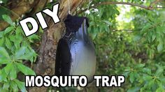 How to Make an Ovitrap Mosquito Trap