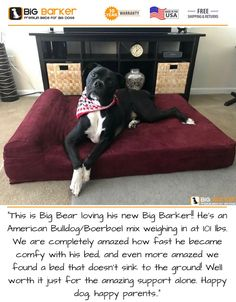 Orthopedic Dog Beds for Large & Extra Large Dogs Large Breed Dog Beds, Dog Beds For Small Dogs, Cool Dog Beds, Big Dogs, Large Dogs, Happy Parents, 1. Tag, Orthopedic Dog Bed, Gentle Giant