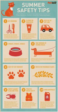 Summer Safety Tips for Your Dog and Cat (Infographic) - Tiere Puppy Care, Dog Care, Baby Care, Summer Safety Tips, Cat Care Tips, Pet Tips, Dog Safety, Fire Safety, Dog Facts