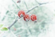 Talvi, Halla, Snow