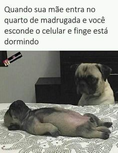Explore our web site for even more info on pugs. It is a superb area to find out more. Memes Estúpidos, Best Memes, Funny Memes, Jokes, Pug Meme, Funny Dogs, Funny Animals, Carlin, Pug Puppies