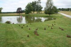 Smiling Hill Farm Duck Pond
