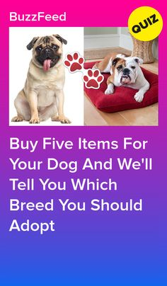 Dog Quizzes, Quizzes Funny, Musical Quiz, Best Buzzfeed Quizzes, Baby Animals, Funny Animals, Fun Quizzes To Take, House Quiz, Disney Quiz