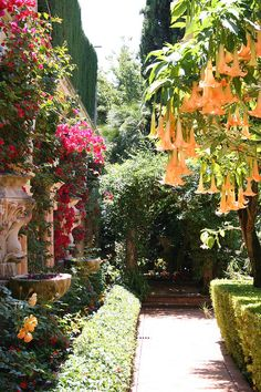 New Pictures Exotic Flowers france Tips Nearby bouquets and plants can be quite a good addition to any kind of business office or perhaps family tabl Exotic Flowers, Beautiful Flowers, Beautiful Gorgeous, Beautiful Pictures, Mediterranean Garden Design, Angel Trumpet, The Secret Garden, Parcs, Tropical Garden