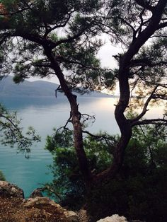 Aegean Sea from the Forest-camp Akyaka