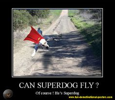 Can superdog fly? Of course! he's Superdog
