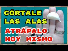 VENDRÁ ARRASTRADO A TUS PIES!! garantizado al 100. Hechizo de amor con ajo - YouTube Carla Loren, Prayer For Love, Soloing, Positive Vibes, Youtube, Positivity, Tips, David, Beautiful