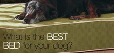 What is the Best Bed for Your Dog? 3 basic dog bed options