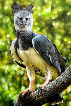 Christian Dating Advice, Harpy Eagle, Different Birds, Great Shots, Pet Birds, Beast, Photo And Video, Nature, Animals