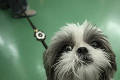 Cute And Furry Animals Photography