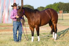 Downunder Horsemanship | Training Tip of the Week: Treats should be a surprise for your horse-if you give them too much they get spoiled, and eventually, a spoiled horse will become a dangerous horse
