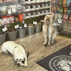 What great self control these two have at Dexter's Deli in Del Mar, look at all those treats, Gunner and Friday got lots of yummy treats today for being sooo good😄 #instadogs #dextersdelidelmar #dogzenergydogs #delmardogs #goldendoodle #labradorretriever
