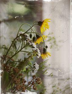 Hullaannu ja hurmaannu: Kesäinen heippa