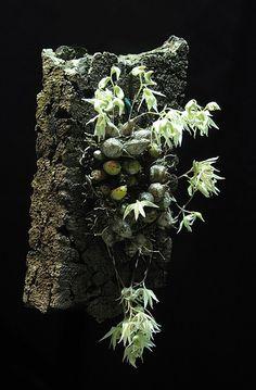 Dendrobium gregulus | por Mikaels orchids